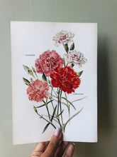 Load image into Gallery viewer, 1960's Carnation and Gilly Flower Vintage Bookplate