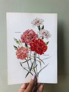 1960's Carnation and Gilly Flower Vintage Bookplate