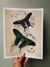 Load image into Gallery viewer, Vintage Style Butterfly Print