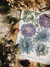 Load image into Gallery viewer, Vintage 1960's Floral Bookplate ~ Eryngium