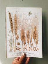 Load image into Gallery viewer, Vintage Wheat Bookplate Illustration