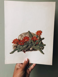 Antique Large Cacti illustration Bookplates (sold separately
