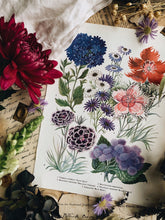 Load image into Gallery viewer, Vintage 1960's Floral Bookplate ~ Great Blue