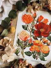 Load image into Gallery viewer, Vintage 1960's Floral Bookplate ~ Rose