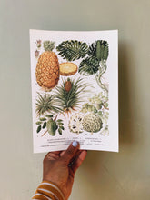 Load image into Gallery viewer, Vintage 1960s Pineapple Bookplate