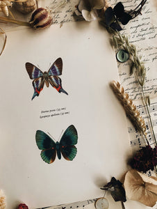 Vintage 1965 Lithograph Butterfly Print