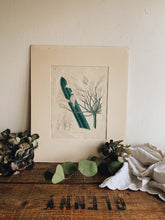Load image into Gallery viewer, Antique Agapanthus Print