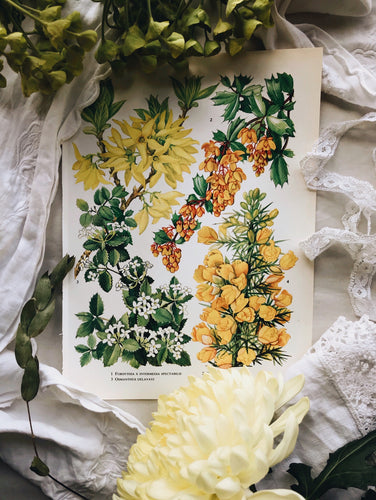 Vintage 1960s Oxford Garden Floral Bookplates