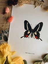 Load image into Gallery viewer, Vintage 1965 Lithograph Butterfly Print