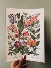 Load image into Gallery viewer, Vintage 1960's Floral Bookplate ~ dicentra spectabilis