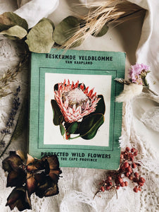 Vintage 1958 Protected Wild Flowers of the Cape Province Book