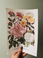 Load image into Gallery viewer, Vintage 1960's Bookplate ~ Rose 3