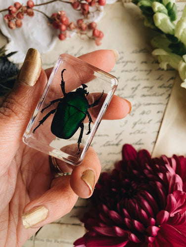 Vintage Taxidermy Insect / Bug / Beetle in Resin
