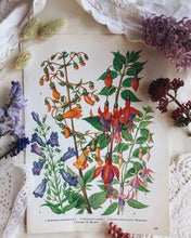 Load image into Gallery viewer, Vintage 1960s Oxford Garden Fuchsia Bookplate