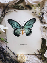 Load image into Gallery viewer, Vintage 1960's Butterfly Print 1