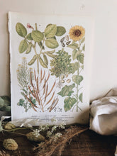 Load image into Gallery viewer, Vintage 1960's Seeds & Sunflower Bookplate