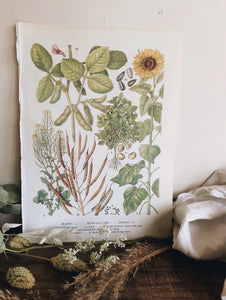 Vintage 1960's Seeds & Sunflower Bookplate