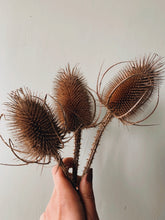 Load image into Gallery viewer, Dried Teasels