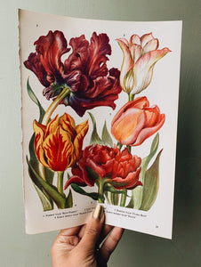 Vintage 1960's Floral Bookplate ~ Tulips
