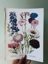 Load image into Gallery viewer, Vintage 1960's scabiosa Bookplate