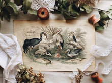 Load image into Gallery viewer, Vintage 18th Century Stork & Crane Bookplate