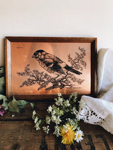 Vintage Bullfinch Copper Etching