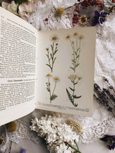 Load image into Gallery viewer, Vintage Wild Flowers of the Wayside & Woodland