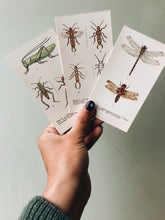 Load image into Gallery viewer, Vintage Observer Fredrick Warne Illustration Insect  Cards