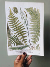 Load image into Gallery viewer, Vintage Ferns Bookplate