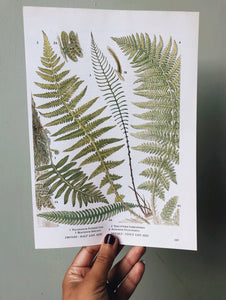 Vintage Ferns Bookplate
