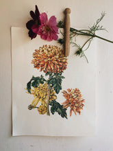 Load image into Gallery viewer, Vintage Dahlia Bookplate Illustration