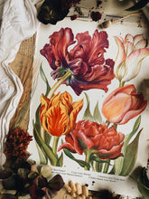 Load image into Gallery viewer, Vintage 1960's Floral Bookplate ~ Tulips