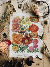 Load image into Gallery viewer, Vintage 1960's Chrysanthemum Bookplate