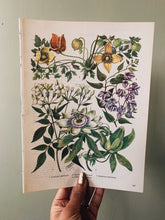 Load image into Gallery viewer, Vintage 1960's Floral Bookplate ~ passiflora caerulea