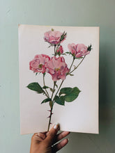 Load image into Gallery viewer, Vintage Rose Illustration Bookplate 6