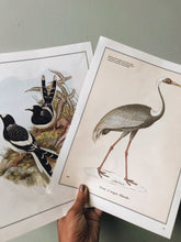 Load image into Gallery viewer, Antique Crane Illustration Bookplate