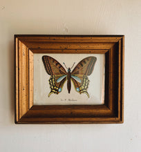 Load image into Gallery viewer, Antique Butterfly Illustration Plate in Frame