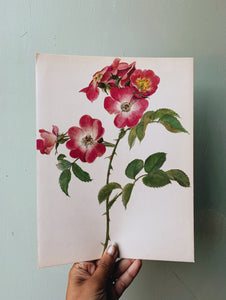 Vintage Rose Illustration Bookplate 1