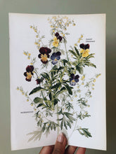 Load image into Gallery viewer, Vintage 1960's Sweet Pansy Bookplate