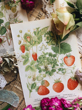 Load image into Gallery viewer, Vintage Summer Strawberry & Raspberry Bookplates