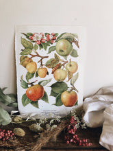 Load image into Gallery viewer, Vintage 1960's Apple Blossom Bookplate