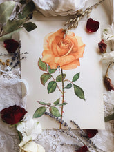 Load image into Gallery viewer, Vintage 1960's Rose Botanical Print 1