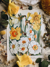 Load image into Gallery viewer, Vintage 1960's Floral Spring Bookplate ~ Daffodils