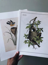 Load image into Gallery viewer, Antique Birds Duo illustrative Bookplates