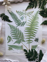Load image into Gallery viewer, 1960's Vintage Fern Bookplate 2