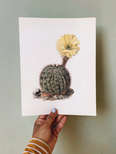 Antique Cacti Illustration Bookplate No 2