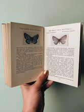 Load image into Gallery viewer, 1935 Vintage British Butterflies Observer Book