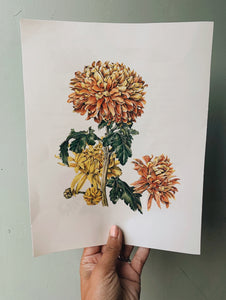 Vintage Dahlia Bookplate Illustration