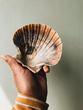 Load image into Gallery viewer, Large Vintage Clam Shell