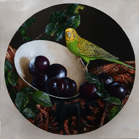 Still life with plums and budgie - oil on linen - 40 X 40 cm